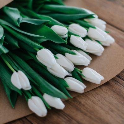 Bunch of White Tulips