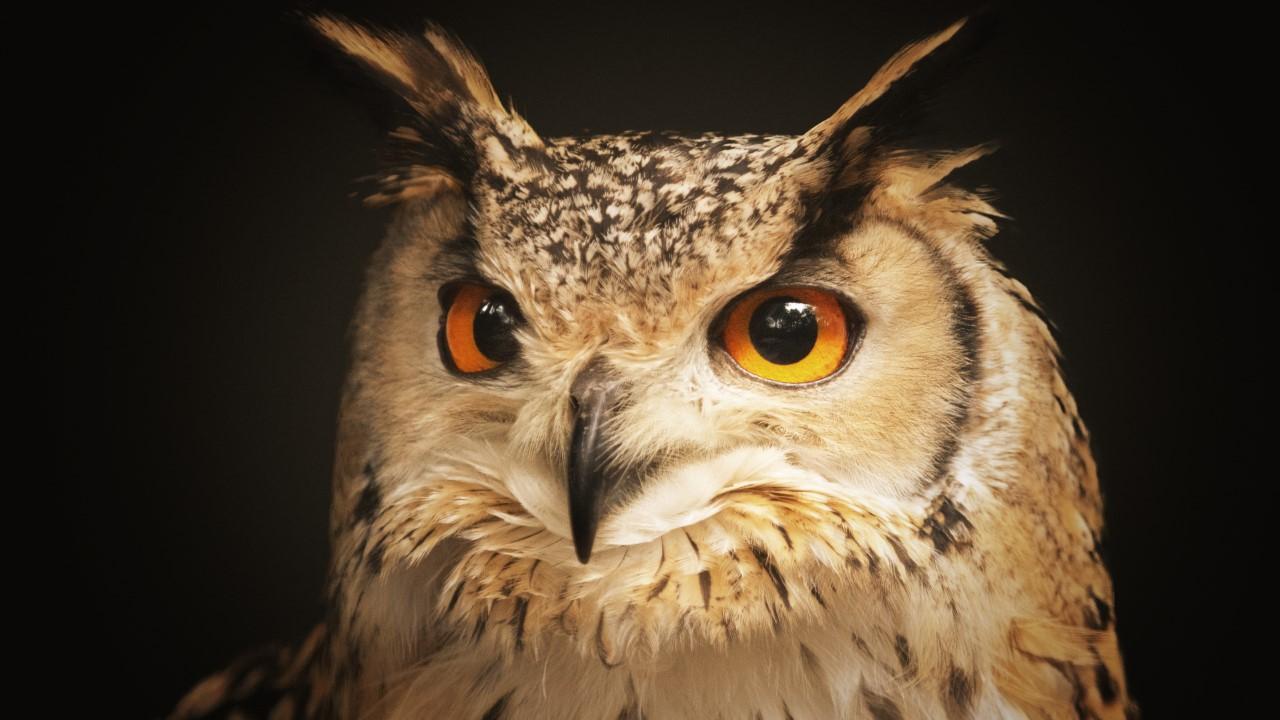 Closeup shot of a beautiful owl looking at the camera