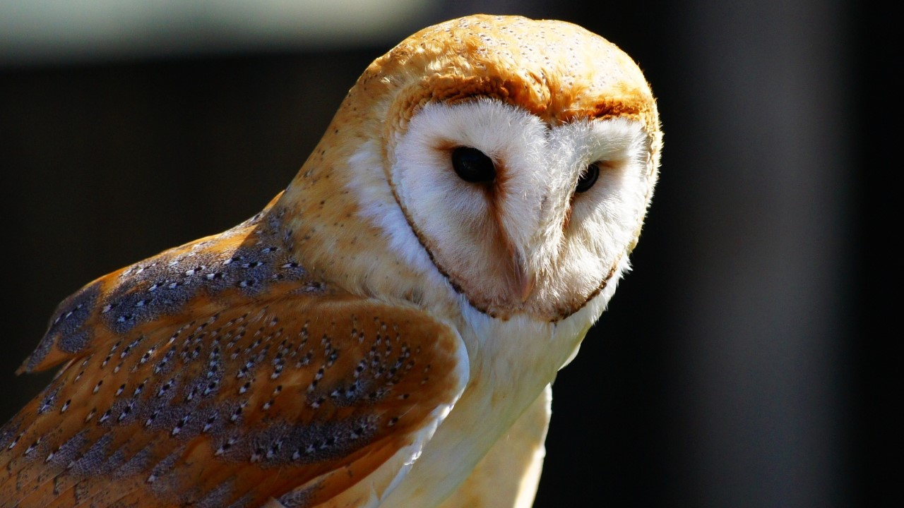 Closeup shot of a cute white and brown owl on a blurred background